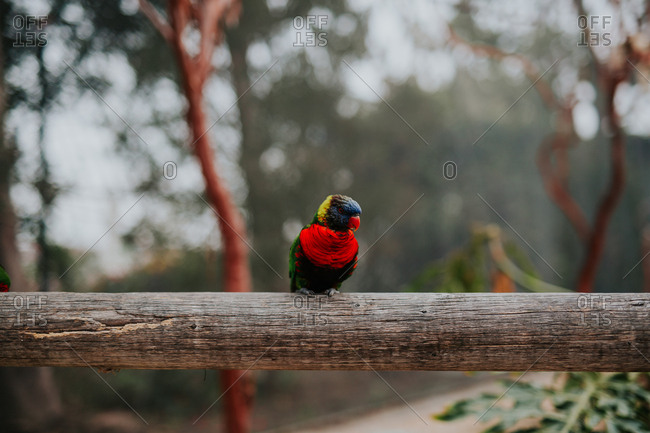 A colorful bird on perch