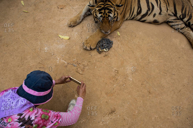 Woman taking photo of tiger