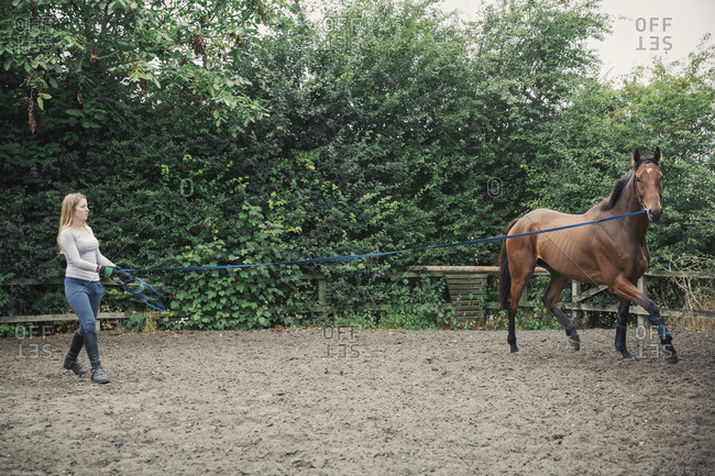 Woman exercising a brown horse in a paddock or schooling ring with a lunging rein.