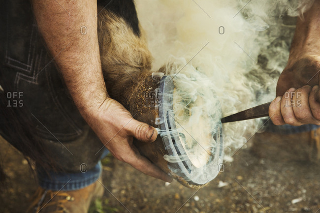 A farrier shoeing a horse, bending down and fitting a new horseshoe to a horse's hoof. Steam rising from the hot metal.