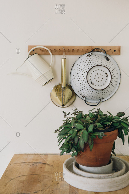 Potted plant by hanging kitchen goods