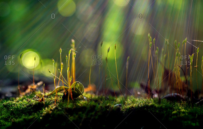 Beams of sunlight pierce the canopy of trees above, and illuminate a small patch of moss on the forest floor.