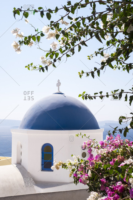 A classic blue dome of a Greek Orthodox church is framed by blooming bougainvillea in Oia.