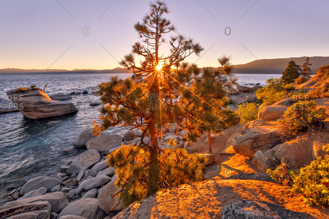 The sun filters through a pine tree near Bonzai Rock in Lake Tahoe.