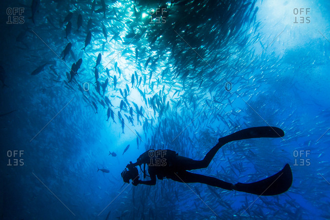 Jack fish schooling in Cabo Pumo National Park.