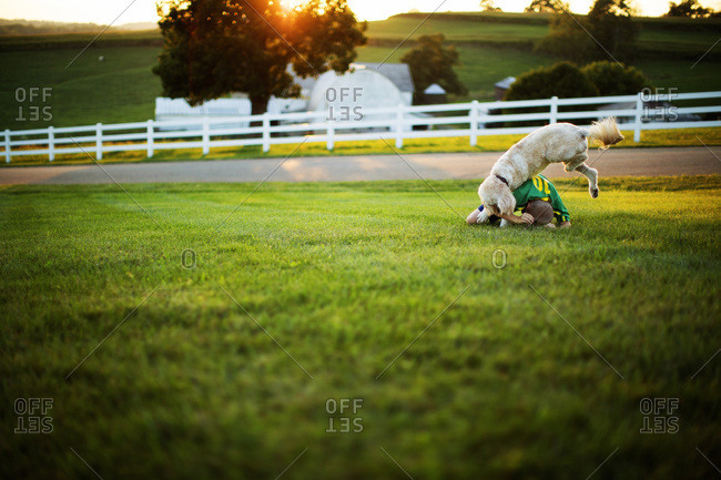 Dog jumping on boy in grass