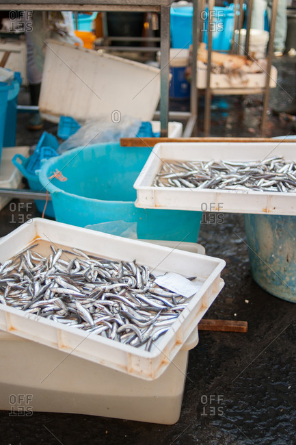 Sardines at a market in Catania, Italy