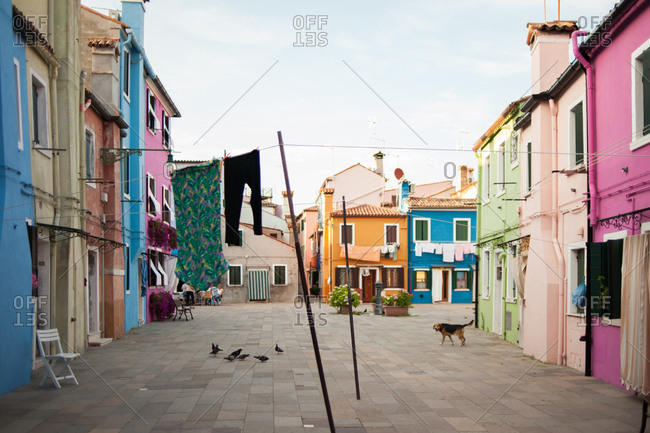 Dog walking in street in Burano, Venice, Italy