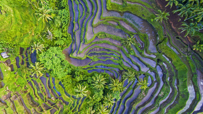 Bali Indonesia's stunning rice terraces as seen from above