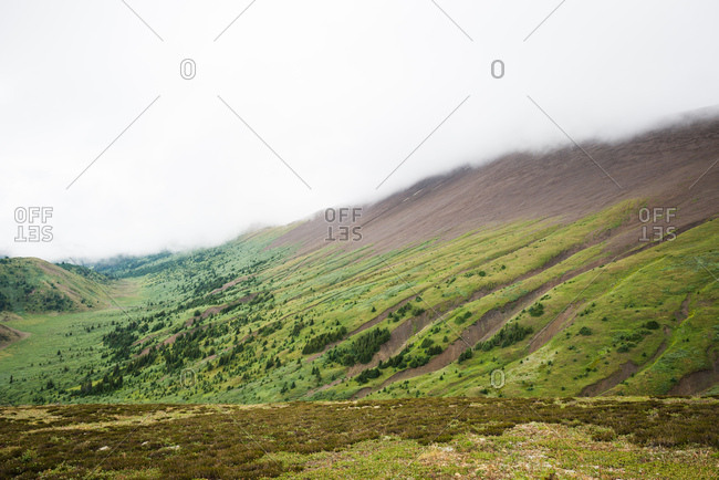 Green trees disappear into billowy clouds on the side of a mountain