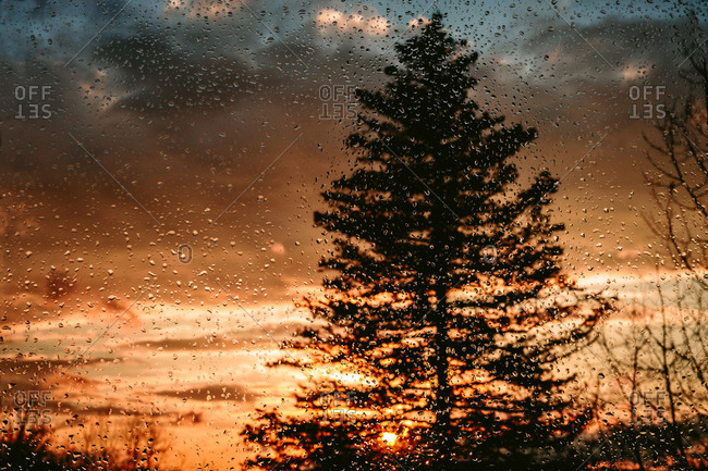Window with raindrops looking onto sunset and tree