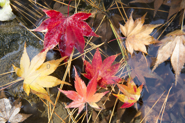 Close up of fall leaves in water