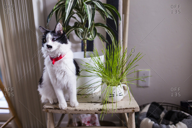 Cat on table with plants