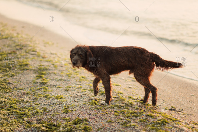 Wet dog on a beach