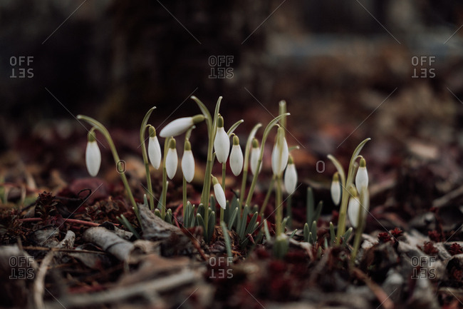 Flower buds popping up in spring