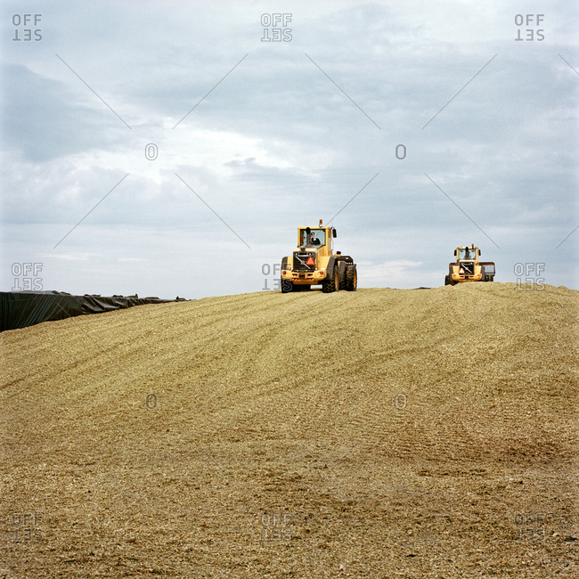 Piling up corn for cattle feed