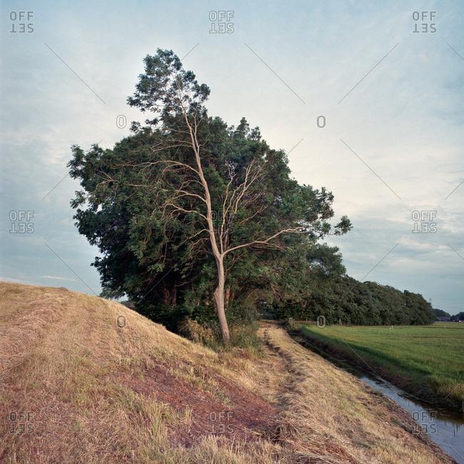Tree among fields