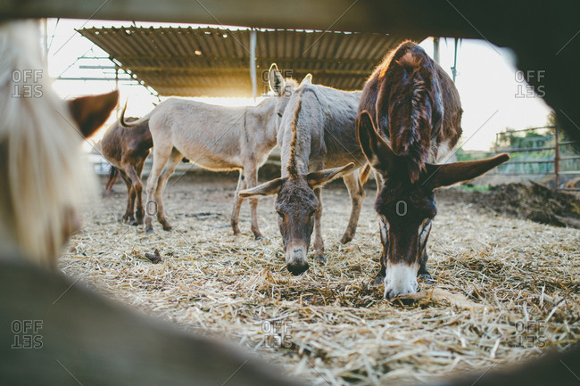 Horses and donkeys stand on the farm