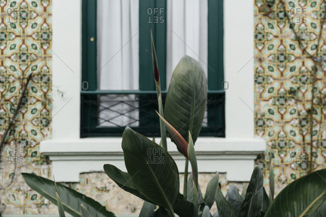 Plant growing outside of a home with tiled walls