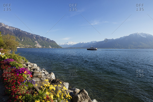 Vaud, Switzerland - May 4th, 2016: Spring flowers, Lake Geneva (Lac Leman), Montreu