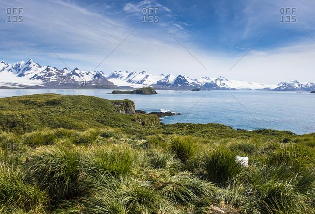 View over Prion Island, South Georgia, Antarctica, Polar Regions