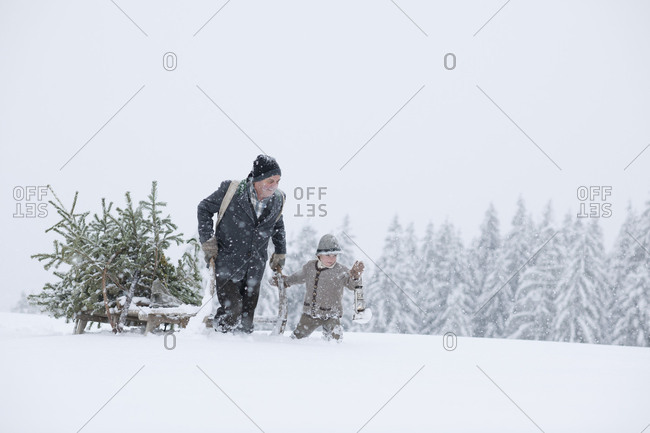 Man and child transporting a christmas tree with a sled