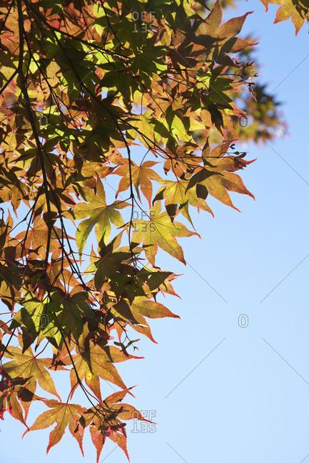 Fall leaves on tree against sky