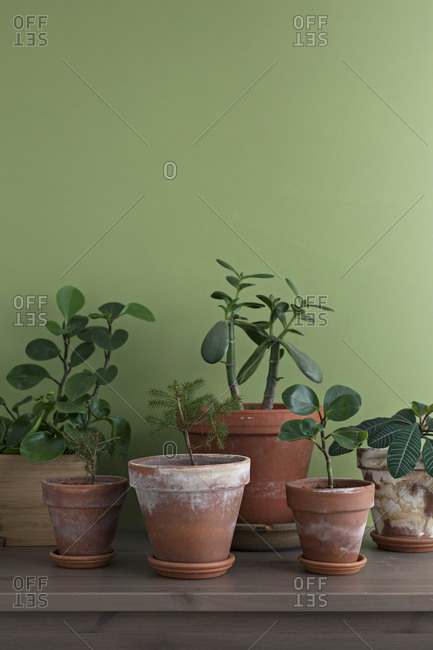 Green plants in terra cotta pots