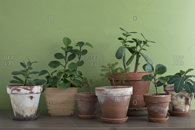 Houseplants in terracotta pots