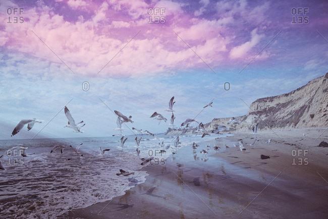 Flock of seagulls, More Mesa Beach, Santa Barbara, California