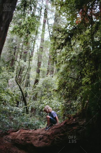 Boy sitting on fallen redwood tree
