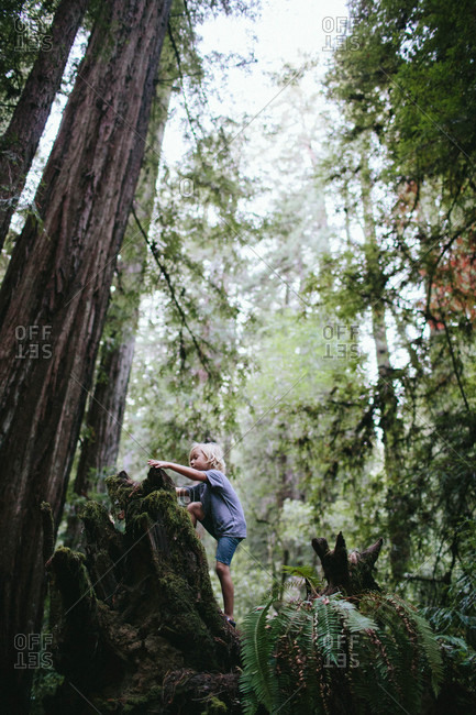 Boy climbing in redwood forest