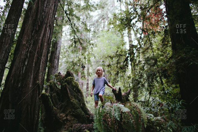 Boy exploring in redwood forest