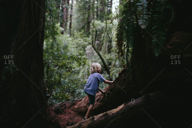 Boy climbing fallen redwood tree