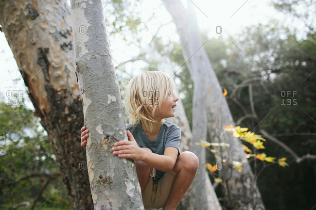 Boy in crook of a tree