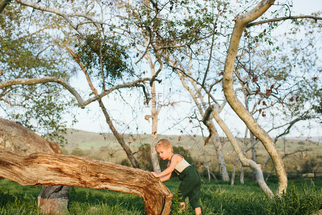 Boy leaning on tree in field
