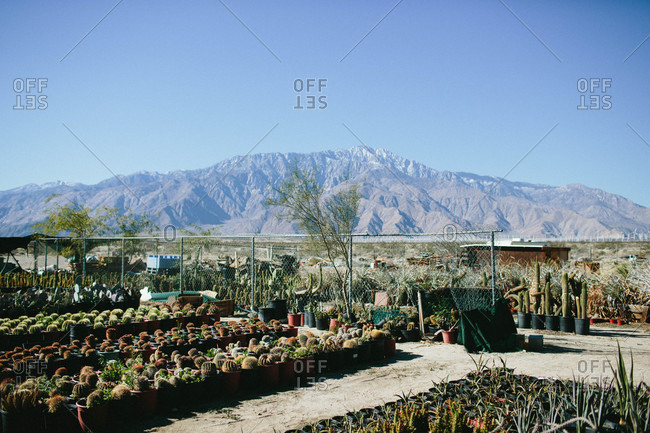 Cactus plant nursery in rural setting