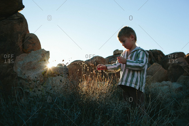 Boy looking at plants by boulders