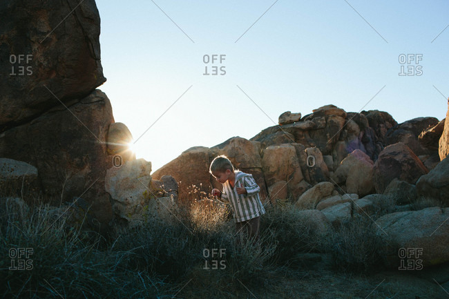 Boy looking at plants among boulders
