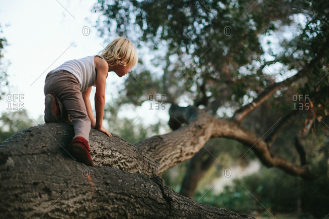 Boy climbing up a tree branch
