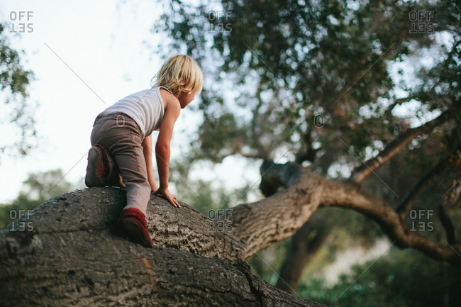 Boy scaling a tree branch
