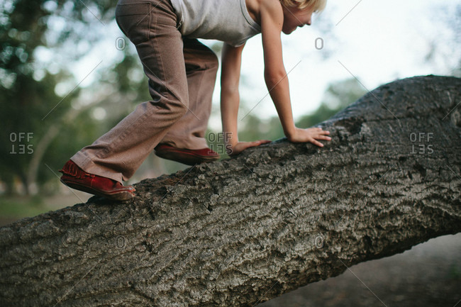 Boy climbing up a tree trunk
