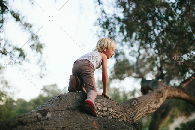 Boy climbing up a tree