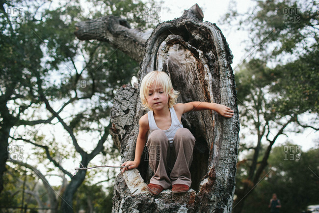 Boy sitting in hole in tree