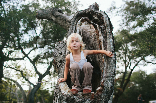 Boy sitting in hole in a tree