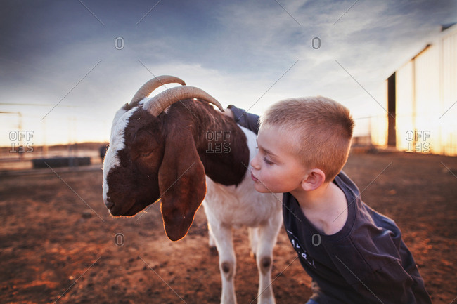 Boy making kiss face to goat