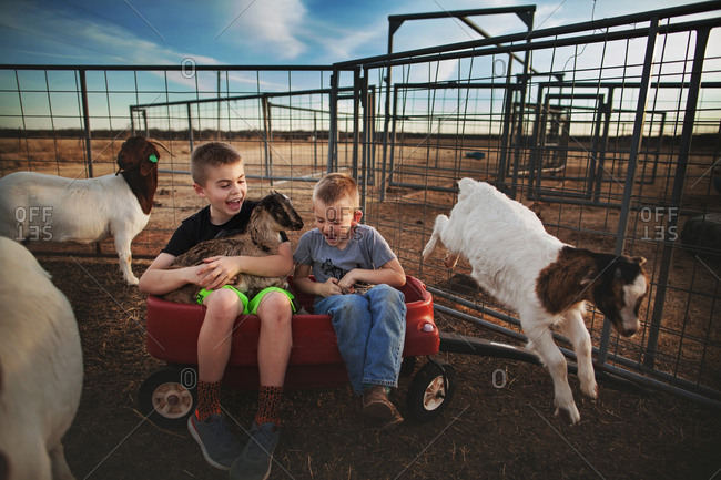 Boys in wagon with goats