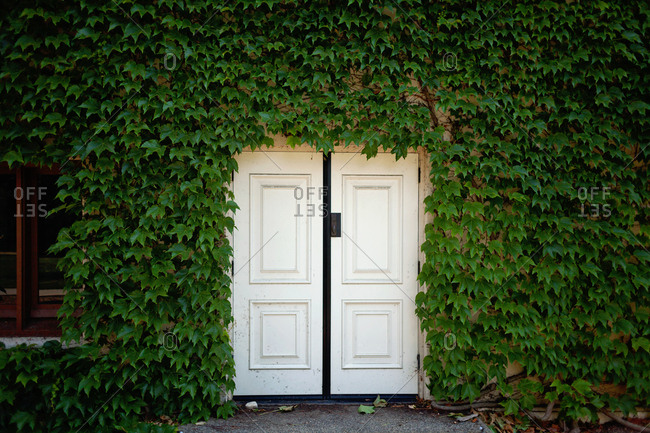 Double doorway surrounded by an ivy-covered wall