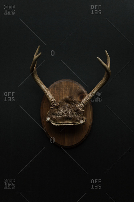 Decorative plaque with animal antlers