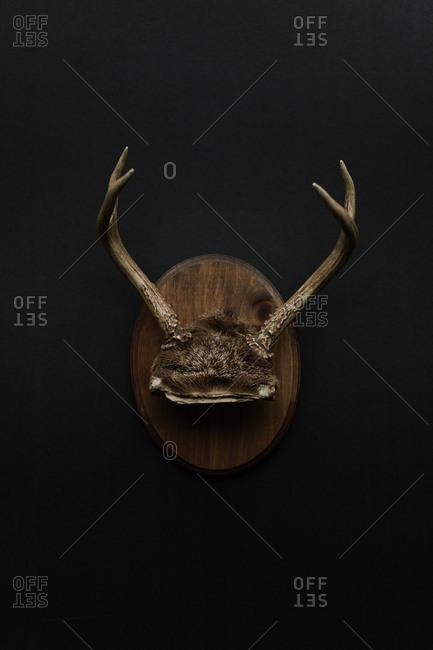 Decorative plaque with animal antlers